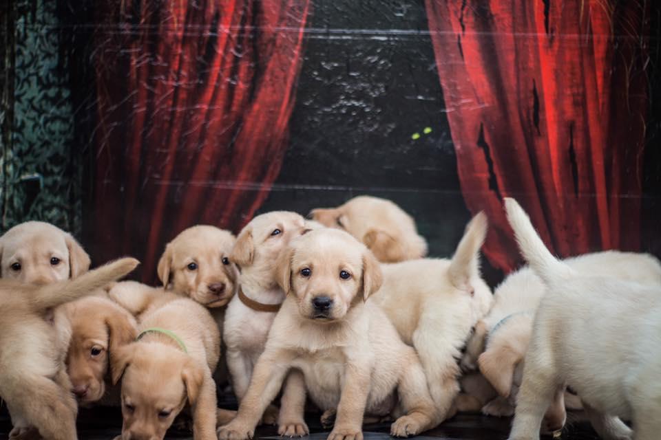 Grupo perritos